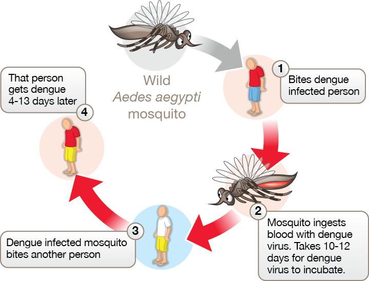 world mosquito program innovationxchange department of. Black Bedroom Furniture Sets. Home Design Ideas